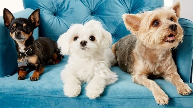 A Simple Guide on How to get Rid of Pet Dander in your Home