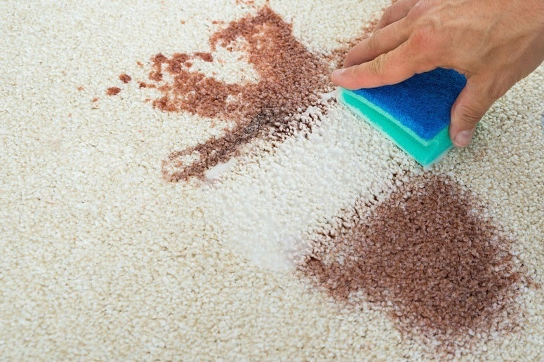 4 Easy Ways To Get Blood Out Of Carpet Clean And Remove