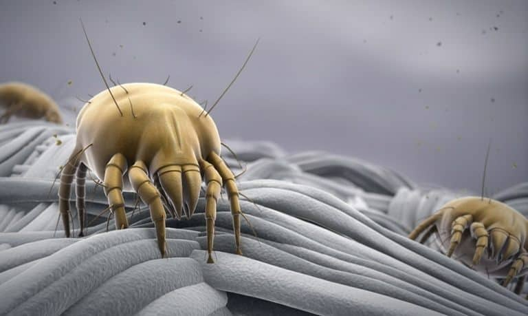 The Truth About How Dust Mites Are Sneakily Ruining Homes