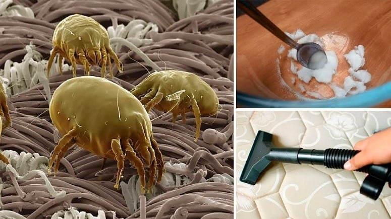 Removing Dust Mites From Mattress