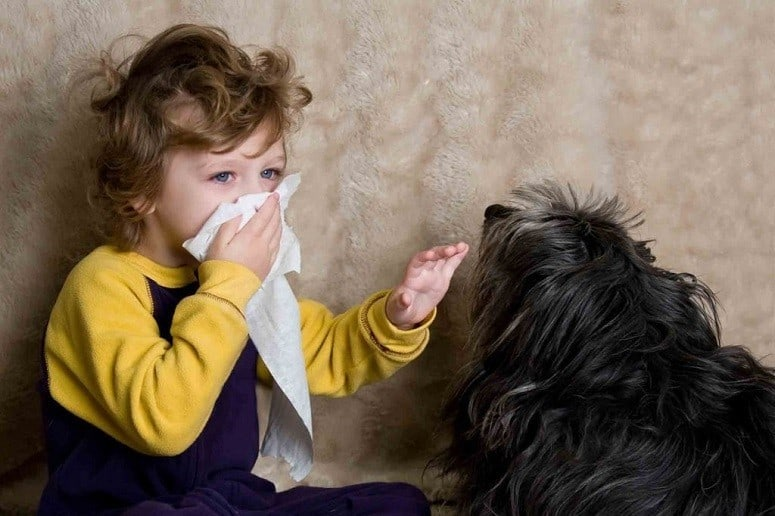 Air Purifiers for People With Pet Allergy