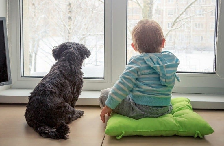 Boy And Dog Sitting At Window