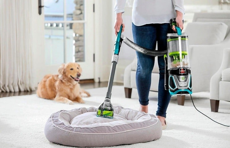 Is It Possible To Have A Clean Home When You Live With Pets?